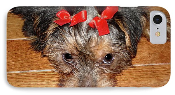 Silky Terrier Puppy Face IPhone Case