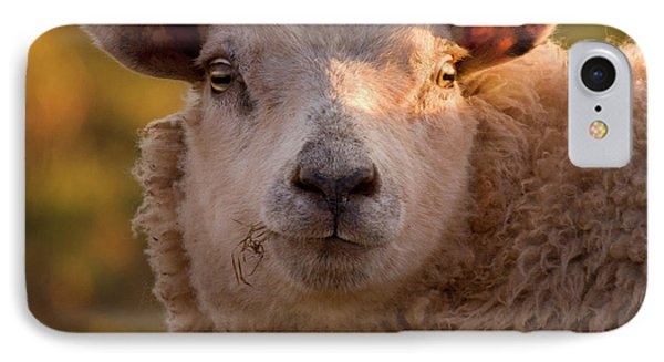 Sheep iPhone 7 Case - Silly Face by Angel Ciesniarska