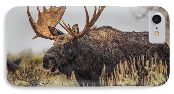 IPhone Case featuring the photograph Silly Moose  by Kelly Marquardt