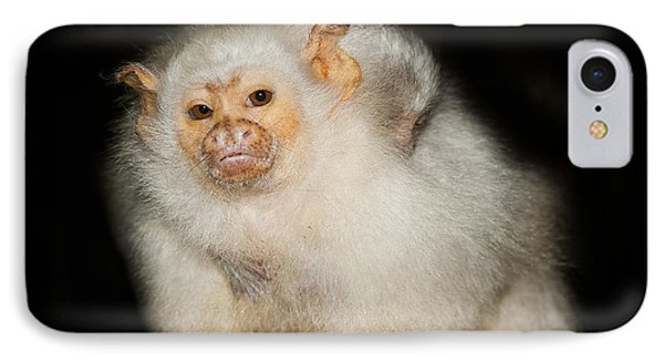 Silvery Marmoset Female IPhone Case by Gerard Lacz
