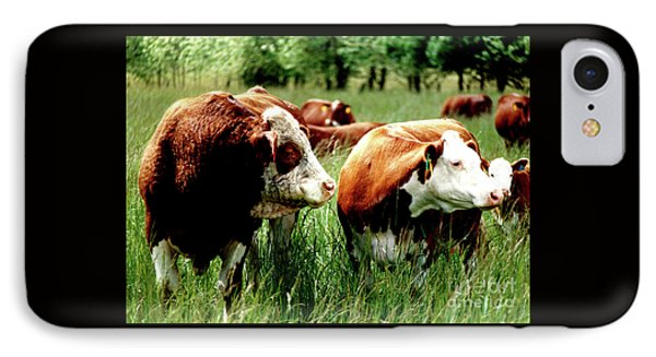 Simmental Bull And Hereford Cow IPhone Case by Larry Campbell