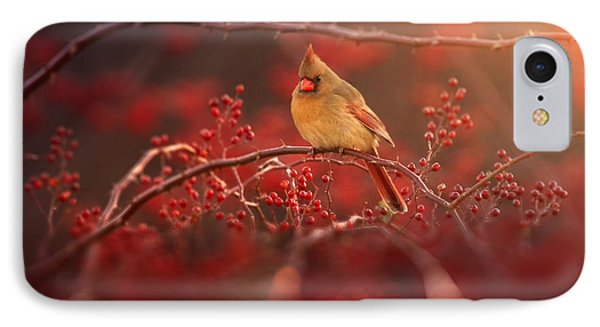 Cardinal iPhone 7 Case - Simple Beauty by Rob Blair