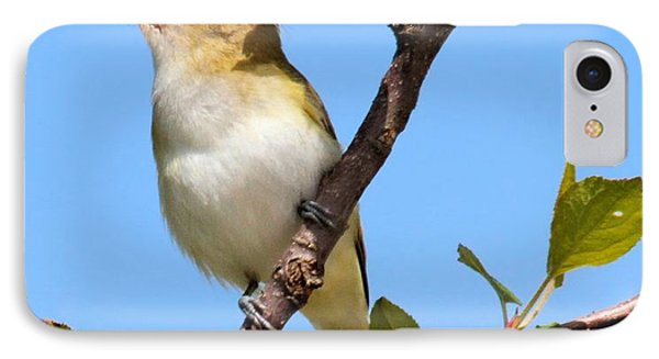 Singing Vireo IPhone Case by Debbie Stahre