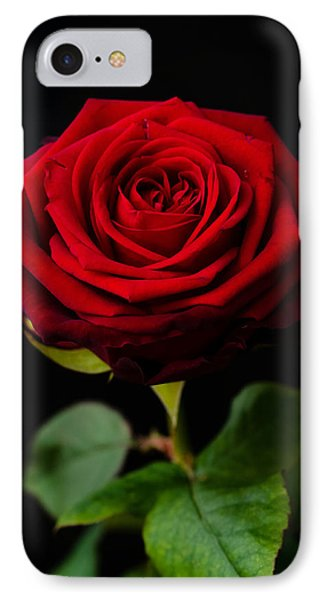 Single Rose IPhone Case by Miguel Winterpacht