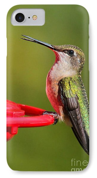 Sitting Pretty IPhone Case by Debbie Stahre