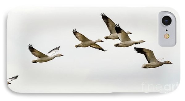IPhone Case featuring the photograph Six Snowgeese Flying by Mike Dawson