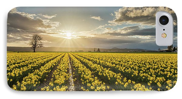 Skagit Daffodils Bright Sunstar Dusk IPhone Case by Mike Reid