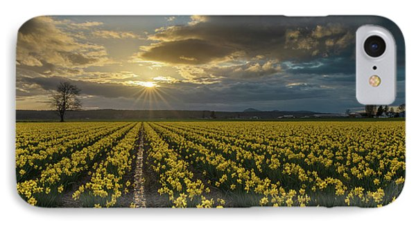 IPhone Case featuring the photograph Skagit Daffodils Golden Sunstar Evening by Mike Reid