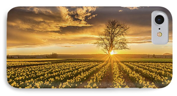 Skagit Valley Daffodils Sunset IPhone Case by Mike Reid