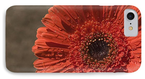Skc 5127 The Heart Of The Gerbera IPhone Case by Sunil Kapadia