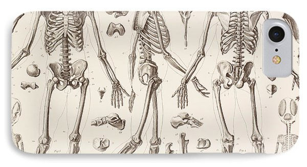 Skeletons IPhone Case by English School