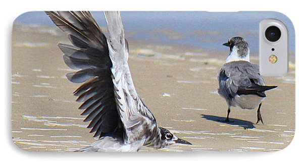 Skiddish Black Tern IPhone Case by Roena King