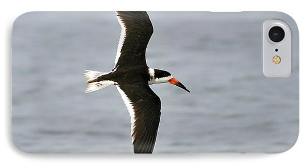 Skimmer In Flight Phone Case by Al Powell Photography USA