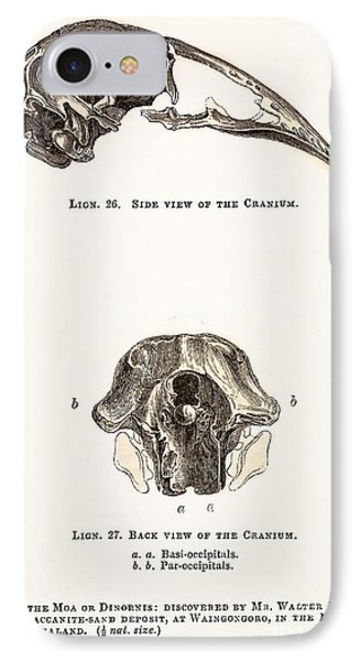 Skull Of Moa Or Dinornis, 1851 IPhone Case by Paul D. Stewart