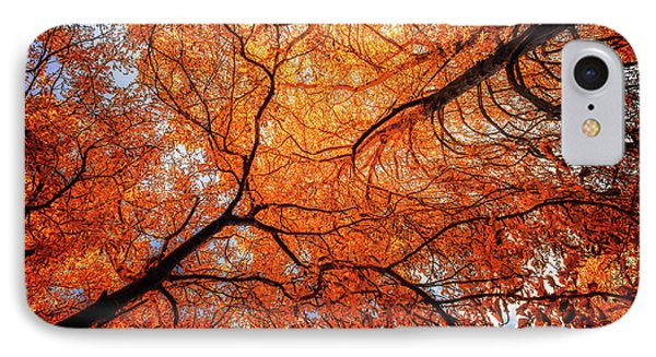 Sky Roots In Forest Red IPhone Case by John Williams