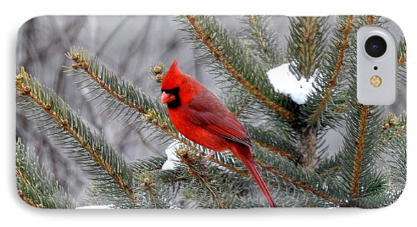 IPhone Case featuring the photograph Sleeping Cardinal by Brenda Bostic