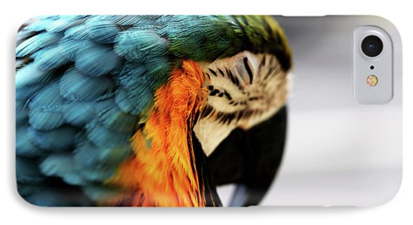 Sleeping Macaw Phone Case by Dan Pearce