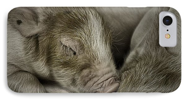 Sleeping Piglet IPhone Case by Brad Allen Fine Art