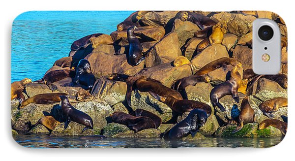 Sleeping Sea Lions IPhone Case by Garry Gay