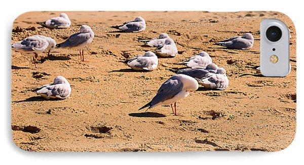 Sleeping Seagulls By Kaye Menner IPhone Case by Kaye Menner