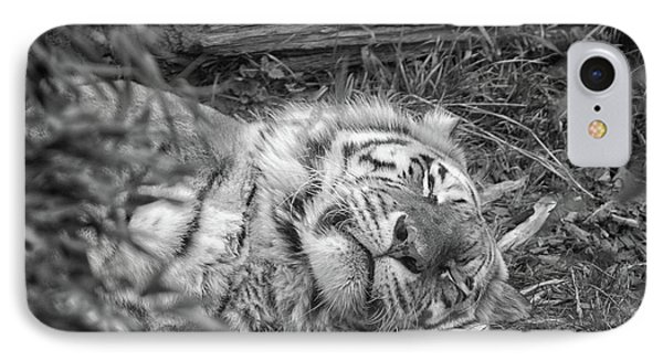 Sleeping Tiger IPhone Case