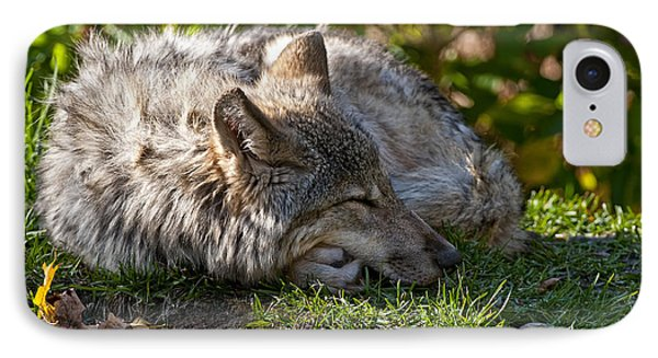 Sleeping Timber Wolf Phone Case by Michael Cummings