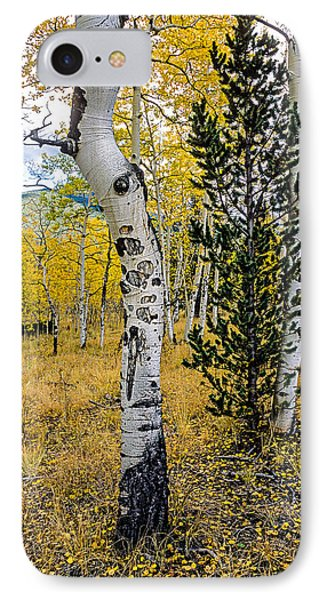 Slightly Crooked Aspen Tree In Fall Colors, Colorado IPhone Case