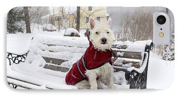 Small Dog Park Bench Snow Storm IPhone Case