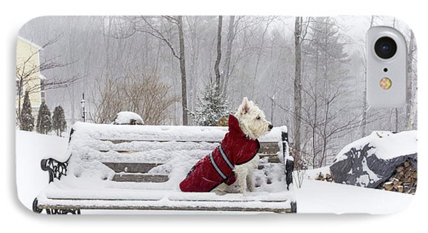 Small White Dog In Snow Storm On Bench IPhone Case