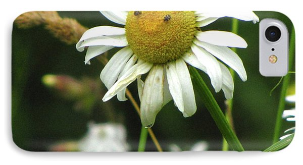 Smiley Face Ox-nose Daisy IPhone Case by Sean Griffin