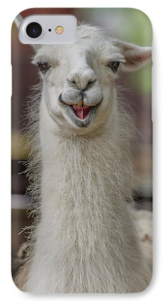 Smiling Alpaca IPhone Case by Greg Nyquist