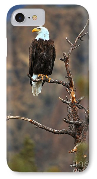 Smith Rock Bald Eagle IPhone Case by Adam Jewell