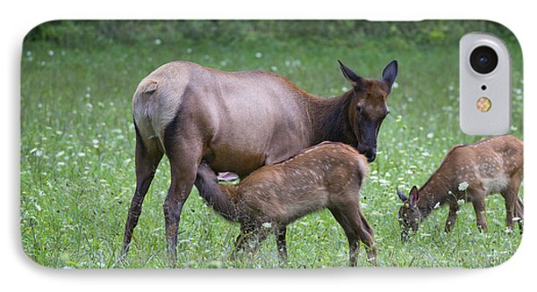 Smoky Mountain National Park Elk Cow Nursing Calf IPhone Case