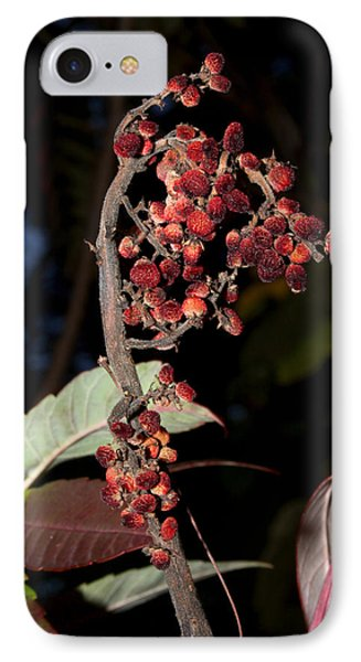 Smooth Sumac Flower Phone Case by Robert Morin