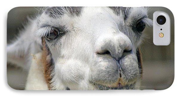 Smug Llama IPhone Case by Kenneth Albin