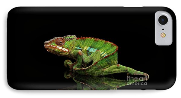 Sneaking Panther Chameleon, Reptile With Colorful Body On Black Mirror, Isolated Background IPhone Case by Sergey Taran