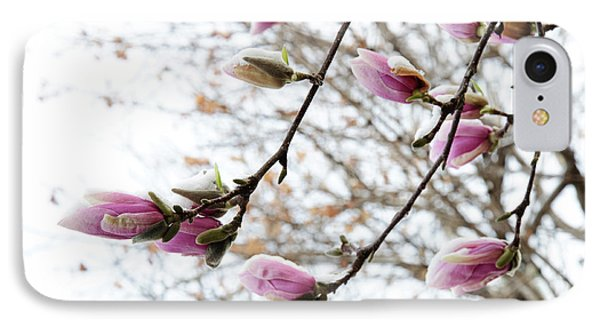 Snow Capped Magnolia Tree Blossoms 2 Phone Case by Andee Design