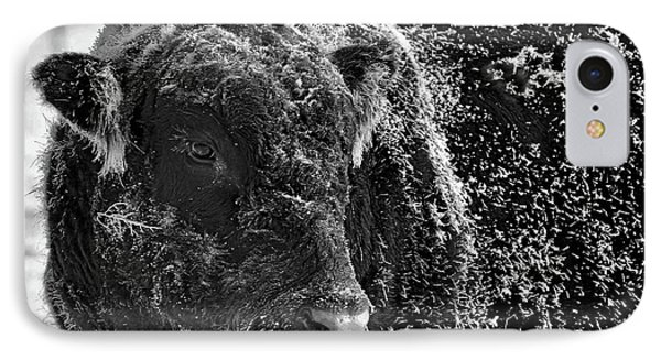 Snow Covered Ice Bull IPhone Case by Amanda Smith