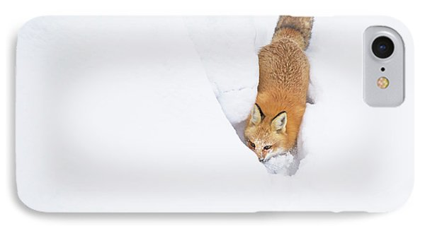 IPhone Case featuring the photograph Snow-diving Fox  by Mircea Costina Photography