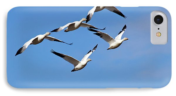 IPhone Case featuring the photograph Snow Geese Flormation by Elvira Butler
