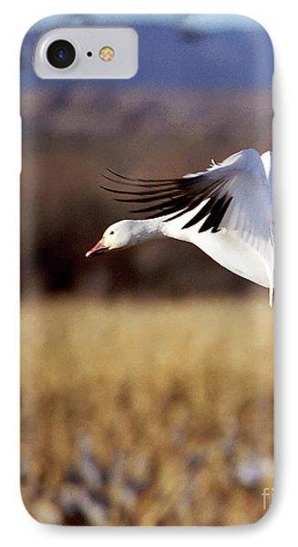 Snow Goose Phone Case by Steven Ralser