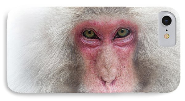 IPhone Case featuring the photograph Snow Monkey Consideration by Rikk Flohr