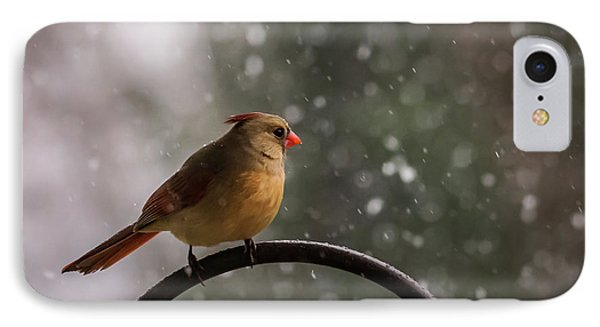 IPhone Case featuring the photograph Snow Showers Female Northern Cardinal by Terry DeLuco