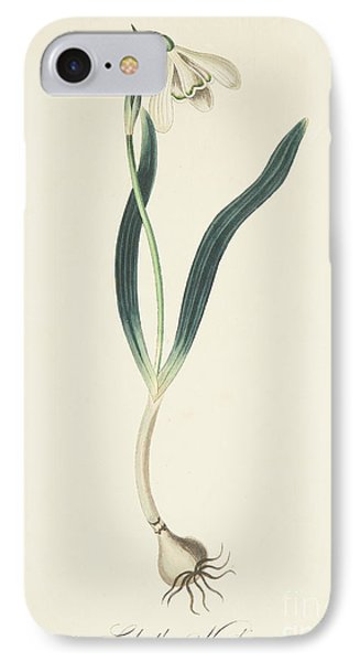 Snowdrop IPhone Case by Margaret Roscoe