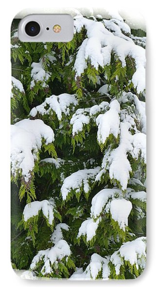 IPhone Case featuring the photograph Snowy Cedar Boughs by Will Borden