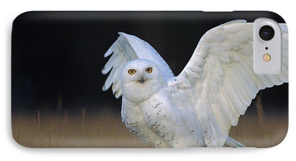 Snowy Owl Adult Circumpolar Species IPhone Case