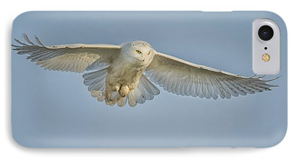 Snowy Owl Against Blue Sky IPhone Case by CR  Courson