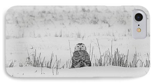 Snowy Owl In Snowy Field IPhone Case by Carrie Ann Grippo-Pike