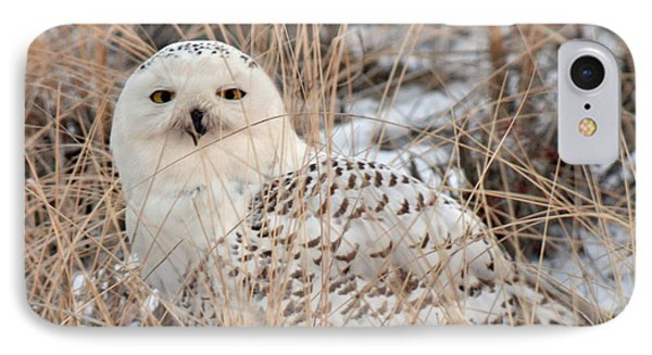 Snowy Owl Phone Case by Nancy Landry