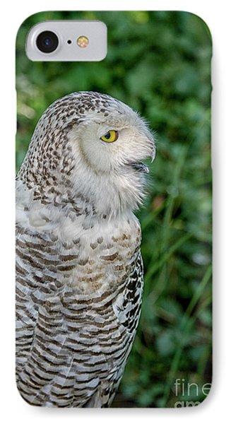 Snowy Owl IPhone Case by Patricia Hofmeester